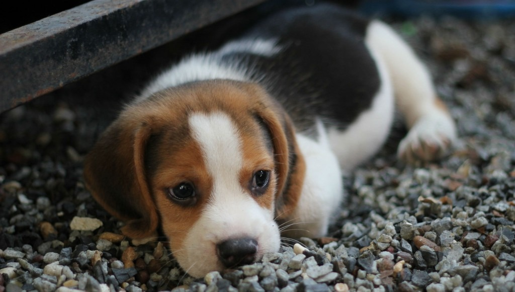 puppy laying in gravel